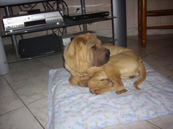 http://loralorapa.cowblog.fr/images/DSCI0009.jpg