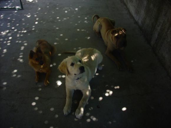 http://loralorapa.cowblog.fr/images/DSCI0017-copie-4.jpg